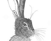 SALE hare portrait #1 ORIGINAL artwork ink illustration 6 x 8