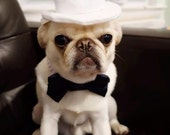 Top hat for Dog or Cat
