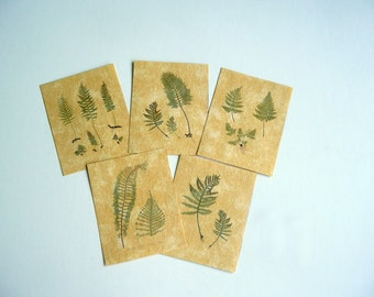 Fern Botanical Posters Dollhouse Miniature
