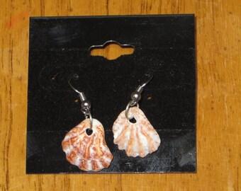 Simple seashell hook dangle earrings