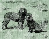 Digital Download Irish Water Spaniels Dog, Vintage Illustration digi stamp, digis, digital graphic, Canine Animal Antique Illustration