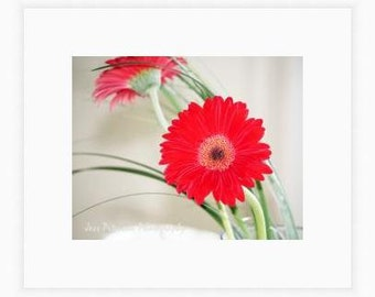 Flower photography. Gerbera Daisy Photos. Red Green Large Wall Art. White Dreamy floral Home Decor. 11x14, 8x10 Nature Fine Art Photograph