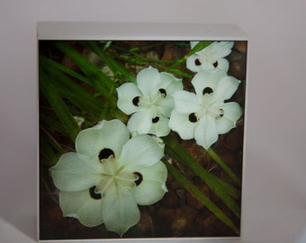 Ivory Flower Photograph on White Wood--A Lovely Quartet--4x4Fine Art
