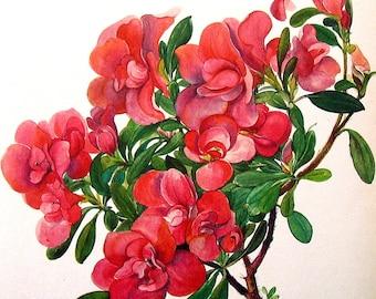 Azalea 1968 Vintage Flowers Book Page