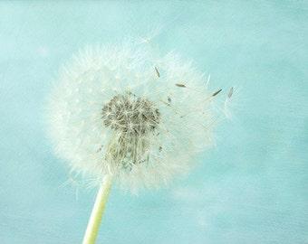 Dandelion Print,  Nursery Decor, Floral Art Print, White Blue Wall Decor, Cottage Chic