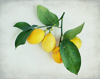 "Lemon still life | fruit photography | citrus lemons print | vintage style | yellow green white | kitchen art | food print ""Lemon Branch"""
