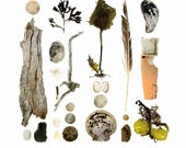 Beachcombing series No.61 - 12 x 12 photograph - feather, sand dollars, seaweed, driftwood