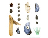 Beachcombing series No.36 - 12 x 12 photograph - blue mussel, shell, driftwood, periwinkle, beach stone