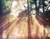 Sun Rays Nature photography, laundry room art, kitchen art, bath decor, golden sky, beams, spring, moss green decor, photograph