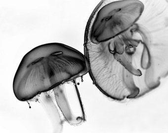 Moon Jellyfish - Black And White - modern contemporary nature sea creature jelly fine art office macro photograph ocean life minimalistic