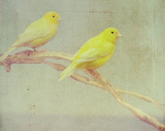 Bird Photography, Nature Photography, Yellow Bird Photo, Birds Print, Yellow, Green, Canaries Photo, Animal Photography, Birds Photo