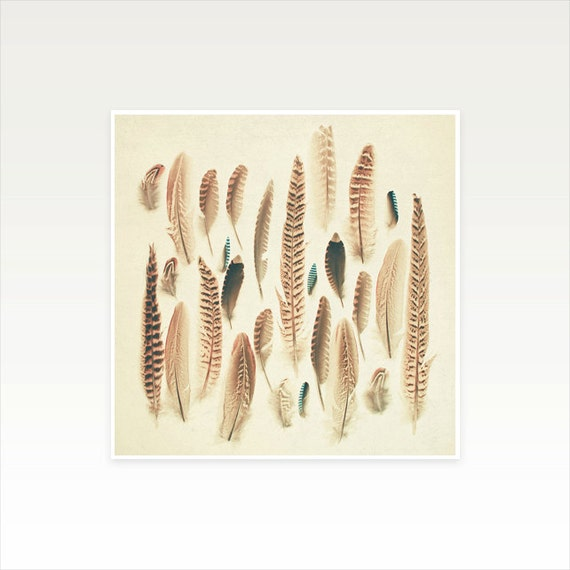 Feather Photograph, Nature Art - Found Feathers