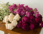50% OFF Bunch of dried peonies, pink, burgundy, cream, dried peonies, pink peony, cream dried flowers, burgundy dried flowers