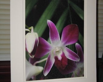 Matted, Blooming, Deep Pink, Orchid, Phipps Conservatory, Pittsburgh, PA, Fine Art, Photography, Print, 8 x 10, Glossy, OOAK