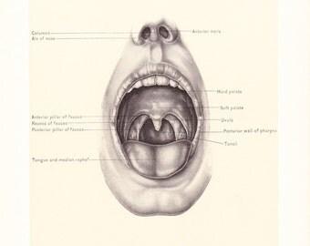 1899 Human Anatomy Print - Mouth - Vintage Antique Medical Anatomy Art Illustration for Doctor Hospital Office