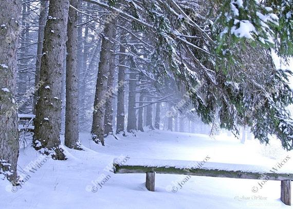 Winter Snowy Pines Park Trees Original Fine Art Photography Photo Print