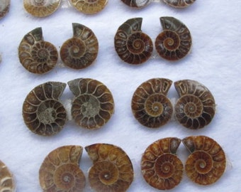 Pair of Ammonite fossils - genuine fossilized shell millions of years old natural - two matching polished specimens or one half spiral shell