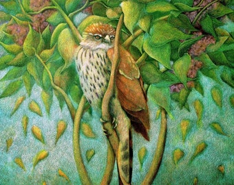 Cooper's Hawk in the Lilac