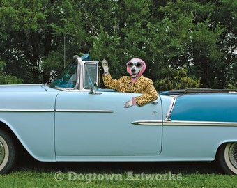 Cousin Opal, large original photograph of a Dalmatian wearing vintage clothes and driving a 1955 Chevrolet convertible