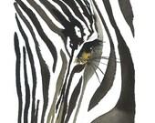 Zebra Eye, print from original watercolor zebra illustration by Jessica Durrant