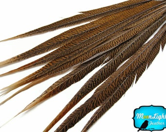 "Wholesale Tail Feathers , 50 Pieces - 18-20"" Natural Golden Pheasant Tail Wholesale Feathers (bulk) : 2030"