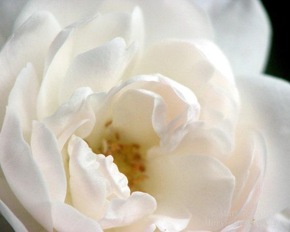 Dreamy White Flower Photo 'Sea Foam' Rose Petals nature fine art floral photography romantic cottage chic home decor 7x5 10x8 14x11