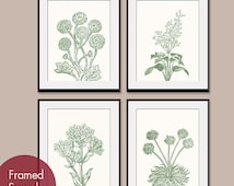 Wild Flowers Botanical Prints (Series C) Set of 4 - Art PRINTS (Featured in Thyme and Soft Cream)