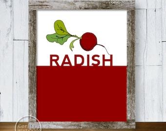 Radish Illustration Art Print Poster - Instant Download 8x10