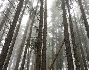 fallen redwood, ca. - digital print