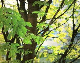 tree, jardin du luxembourg...paris - digital print