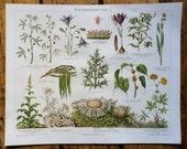 1894 flowers & plants original antique botanical print