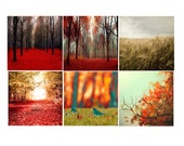 SALE, Nature photography, Set of 6 Prints, Red Forest Print, Orange Leaf Photo, Gold Fall Prints, Rustic Fall Photos, Set of 6 Photos