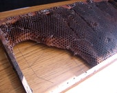 Vintage Beehive Frame Insert with Honeycombs