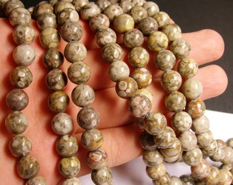 Fossil Jasper - 10mm  round beads -1 full strand - 40 beads - RFG321
