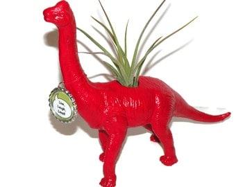 Red dinosaur planter. Bonnie the Brachiosaurus Dinosaur with air plant.