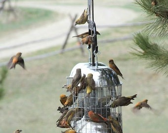 Squirrel Proof, LARGE BIRD STOPPER, Bird Feeder, for Songbirds
