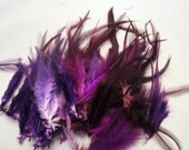 50 Feathers assorted purple saddle hackles 3 to 6 inches craft feathers k1174