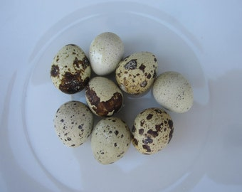 Lot of 8 hand blown Quail eggs