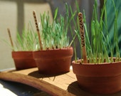 Cat Grass Wine Stave Planter Kit, Gardening Gift Ideas, Pet Treats, Organic Seeds, Wheatgrass, Hairball Remedy, Terra Cotta, Pet Accessories