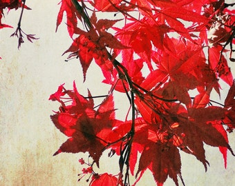Red Photography, Tree, Crimson Red Leaves Print, Bright Red Modern Tree Print, 8x10