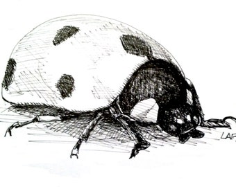Original Drawing or Limited Edition Print-Ladybug  in black pen and ink.