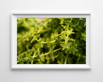 Green Kitchen Decor - Oregano Food Photography - Green Kitchen Art, Herb Art, Food Art - Small and Oversized Art Prints Available