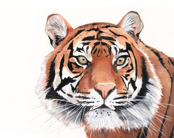 Tiger Watercolor Painting- animal art- print of watercolor painting - A4 size  print