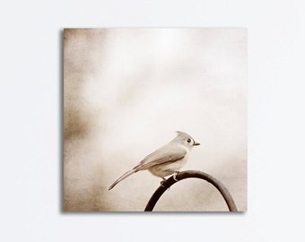 Bird Canvas Wrap - neutral photography wall art nature photograph tufted titmouse cream white beige light brown fine art canvas print