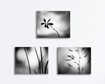 Black and White Nature Canvas Set - dark grey botanical wall art gray photography modern gallery wrapped canvas set fine art photographs