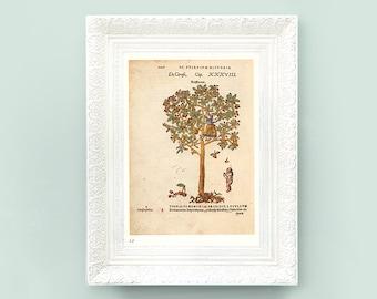 6x8 Cherry Tree Botanical Print. Cherries Neutral Pale Green Vintage Print. Wildflower Encyclopedia Illustration Classification Flower TFA