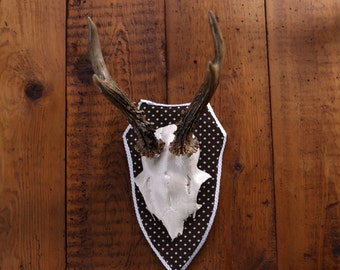 "Stylish wall sculpture, deer antler with scull, deer scull, deer mount, wall decoration, antler hook, antlers,  ""Chlothilde"""