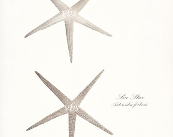 Two Coastal Decor Antique Sea Stars - Nautical Sea Shell Giclee Art Print 8x10 antique white