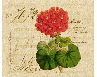 Coral red geranium French ephemera Instant digital download image for iron on fabric burlap transfer decoupage paper pillow tag Item No 2144