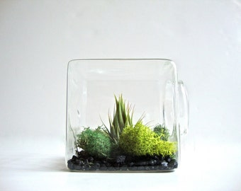 Stackable Living Eco Cube / Modern Air Plant Glass Terrarium Cube, Air Plant Cube Terrarium, Air Plant Square Terrarium, Unique Home Decor